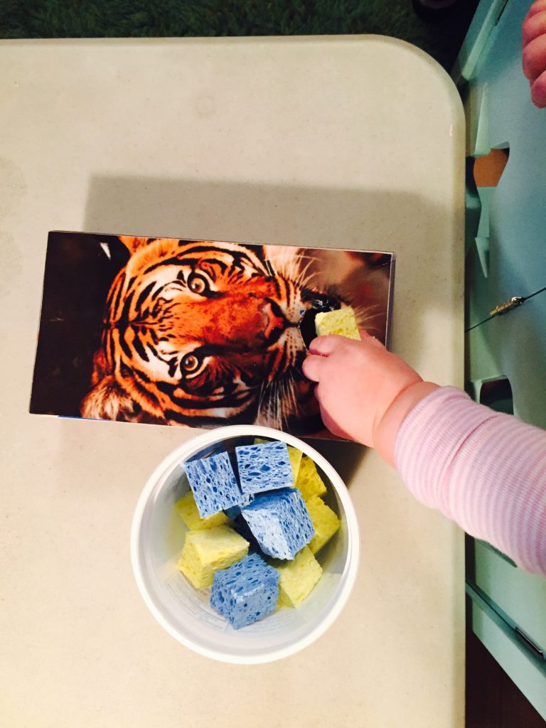 Tiger sorter with sponge pieces, Tuesday box of activities, play ideas for toddlers, activities for one year old, montessori activities for a toddler, development promoting activities for toddlers, activities for 13 month old, activities for 14 month old, activities for 15 month old, activities for 16 month old, activities for 17 month old, activities for 18 month old, activities for a toddler, activities for one year olds, activities for two year olds